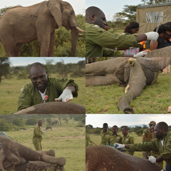 elephant treatment simba milima 26th june 20181